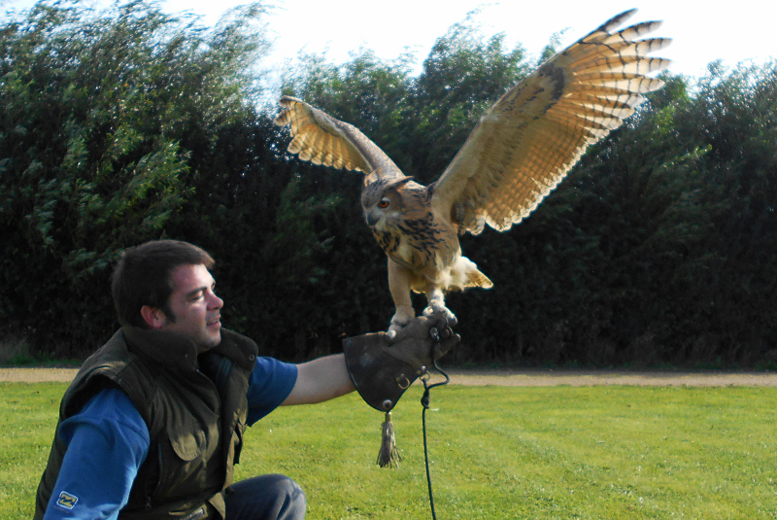 From £14 instead of £50 for a 90-minute falconry experience for one person, £25 for two people at Fixter's Falconry, Lincolnshire - save up to 72%