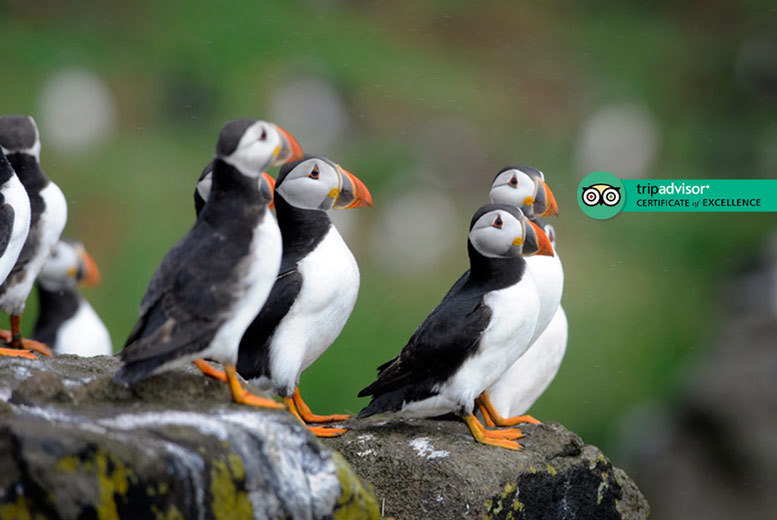 Scottish Seabird Centre Entry for 2, North Berwick - Family Option!