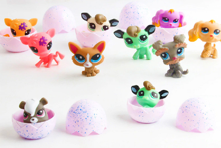 Small Hatching Pet Toy – 3 Options! from £2.99