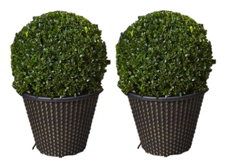 Pair of Buxus Topiary Ball & Gold Planters